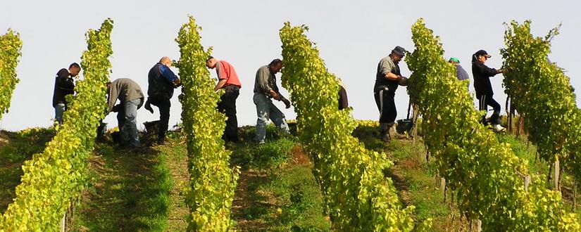 Weingut Bickel-Stumpf • Wein kaufen