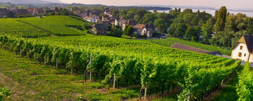 Weingut Chevalier • Wein kaufen